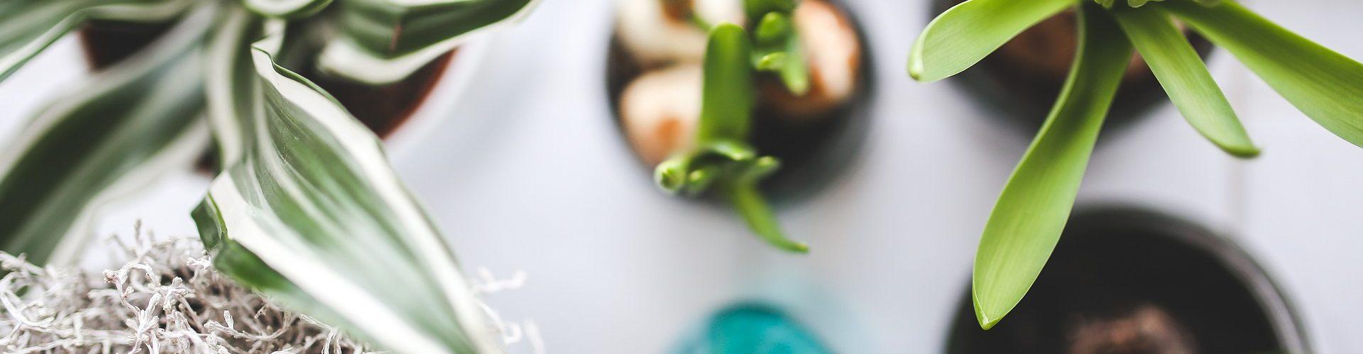 We Stijl 7 tips om tuin en interieur te verbinden