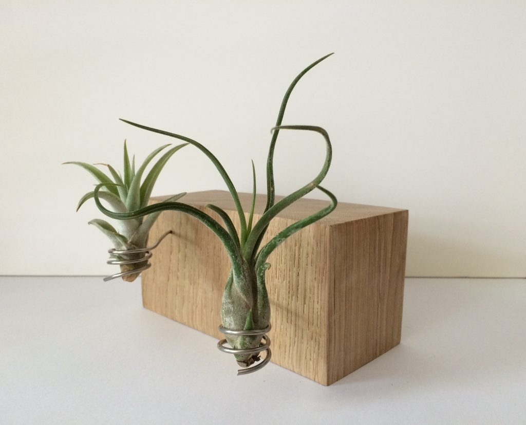 Duo airplant houder laag # 5 | SALE