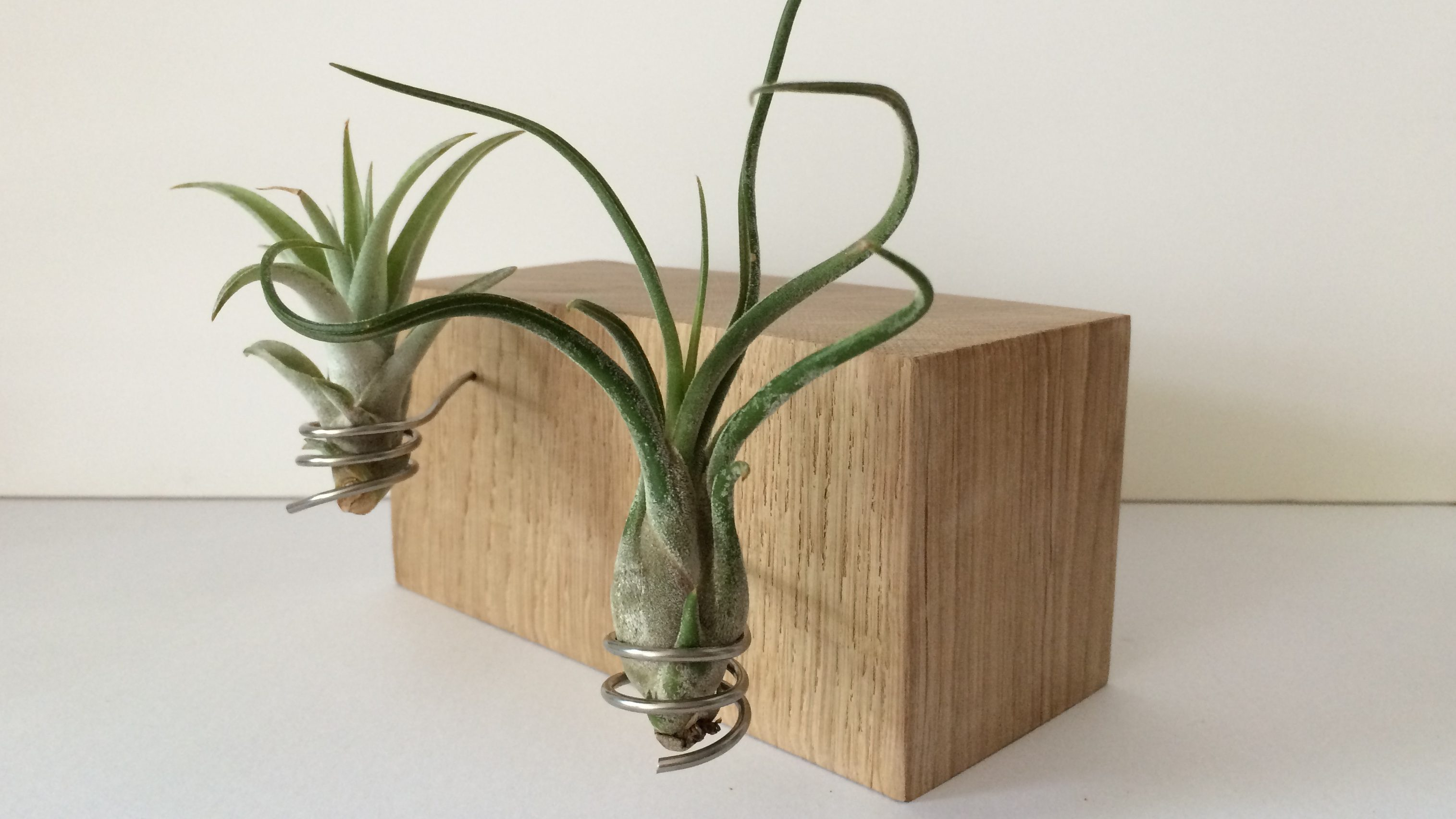 Duo airplant houder laag # 5