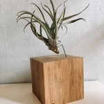 Airplant houder massief eiken XL # 23 | SALE