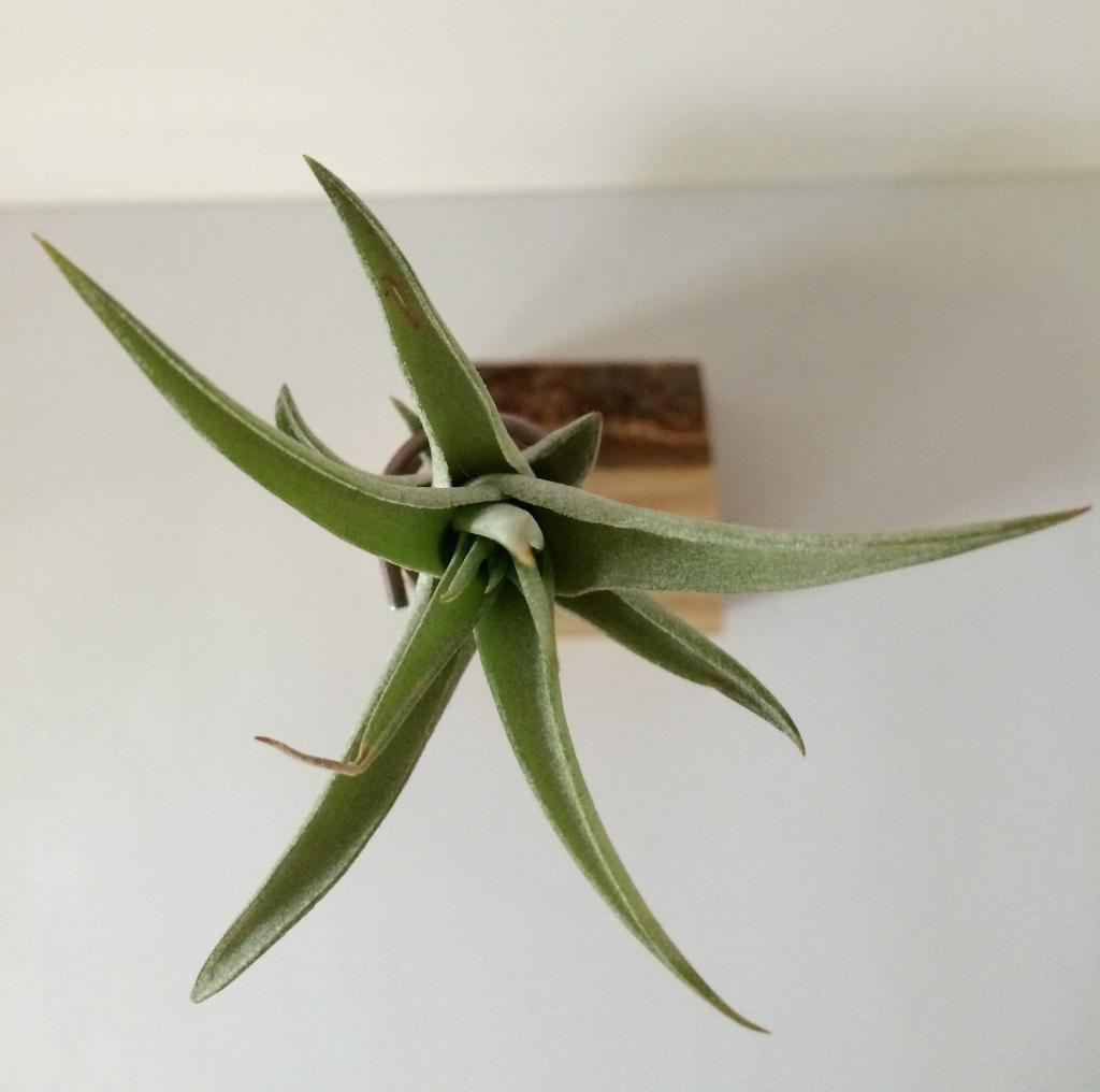 Douglas airplant